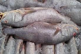 मछुआरा एक ही झटके में हुआ मालामाल, जाल में फंसी एक करोड़ की घोल मछलियां
